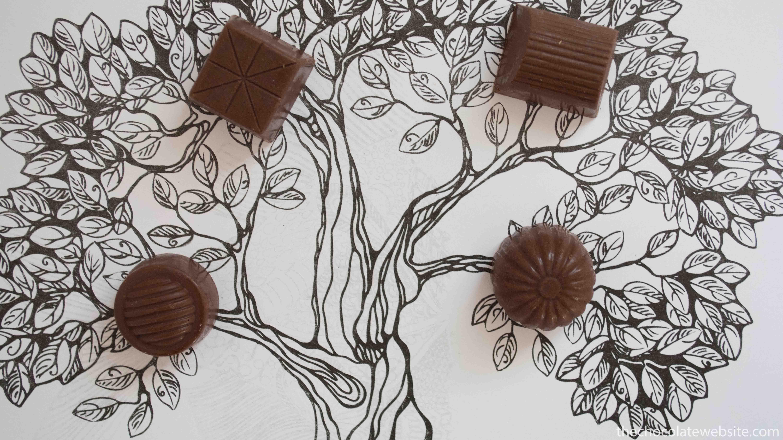 If Chocolate Grew on Trees Photo