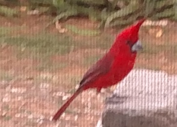 Hogarth The Cardinal